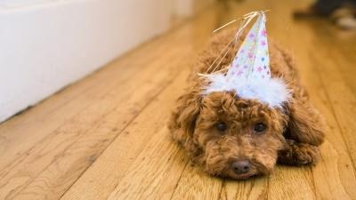 Animals_Dog_Party_Hat_150337_detail_thumb.jpg