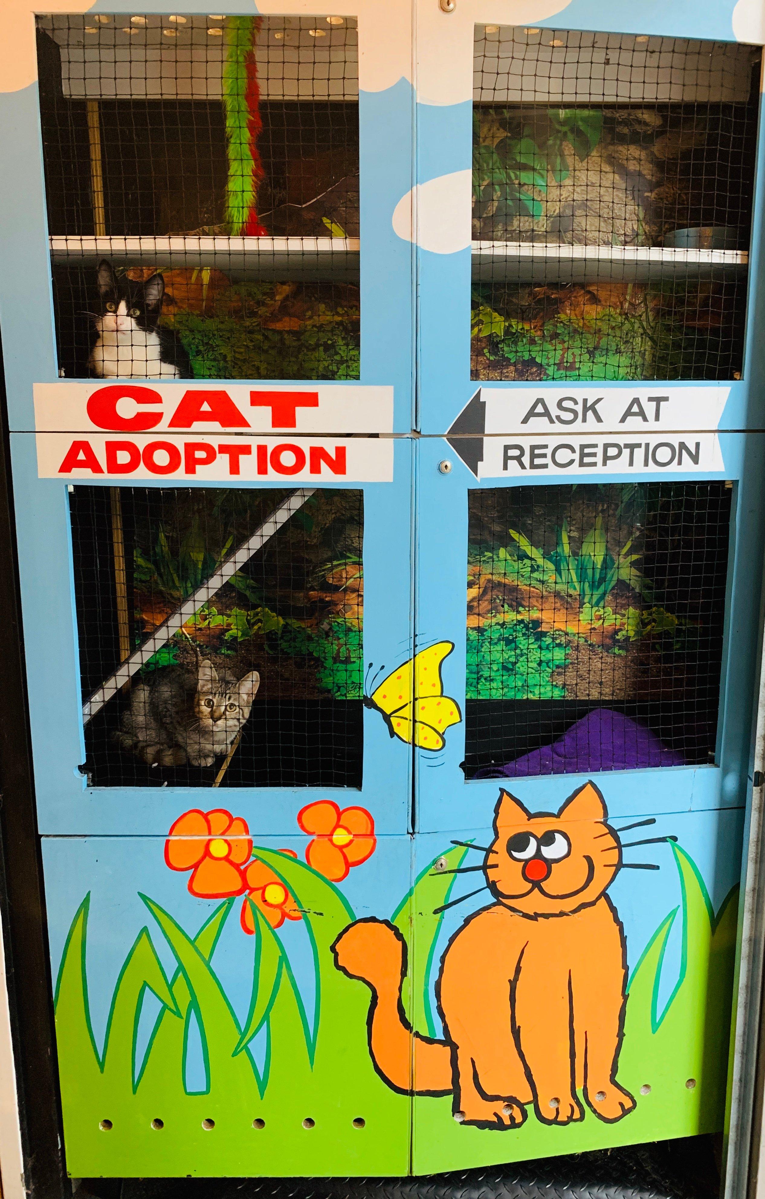 Cat Adoption 2