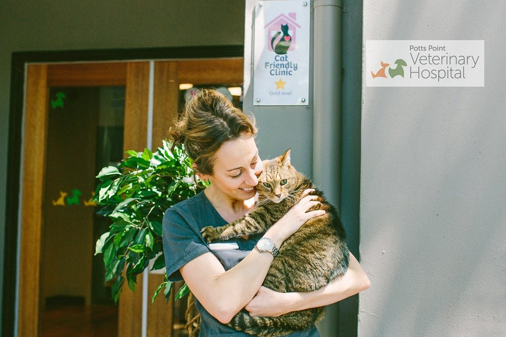 The Gold Standard of Cat Clinics