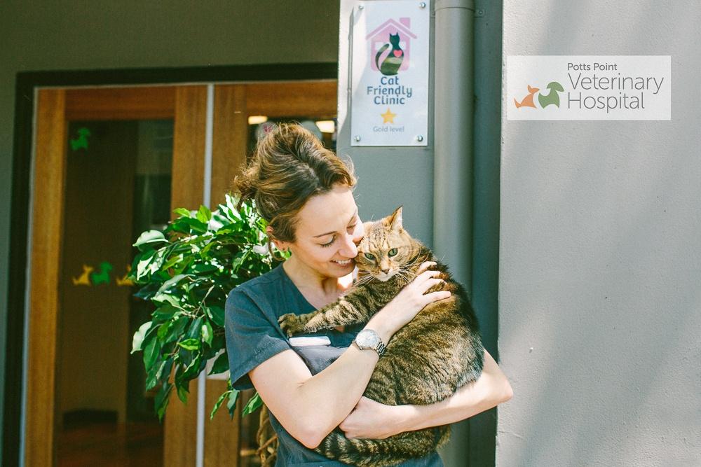 The Gold Standard of Cat Clinics