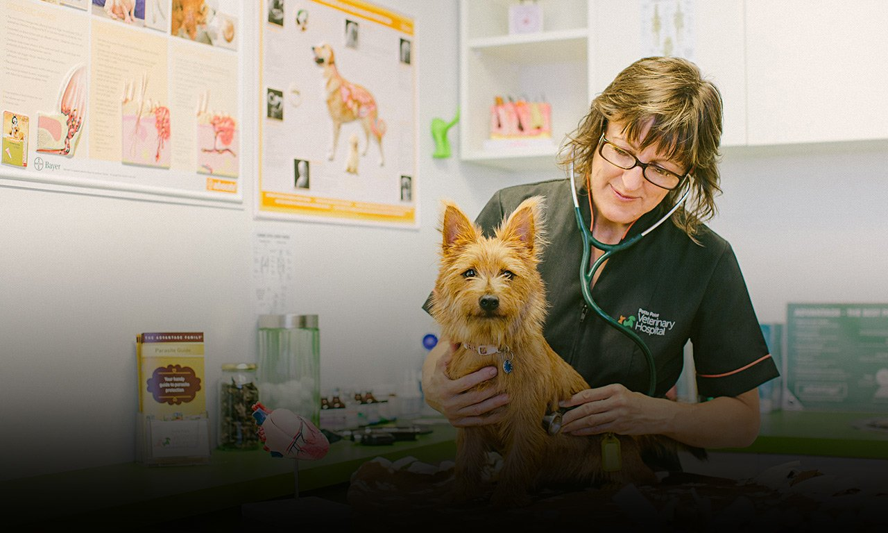 Potts Point Veterinarian